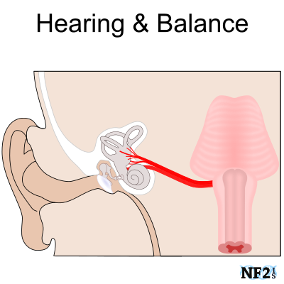Hearing and Balance Issues