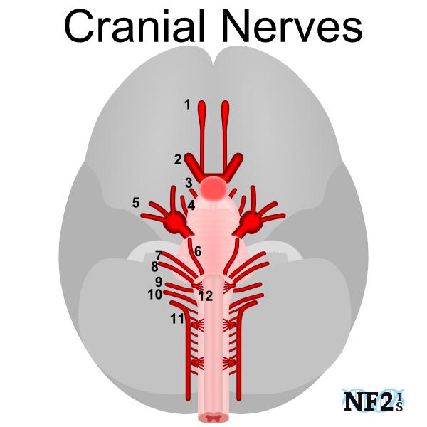 Nerve damage numbs orgasm, gave my virginity